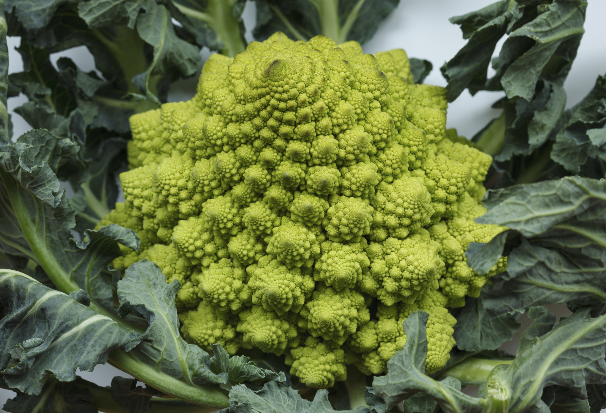 Broccoflower Image